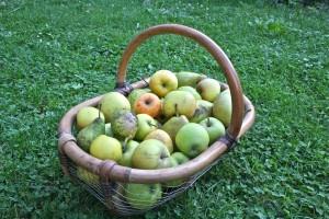 Run, Run to Apples
