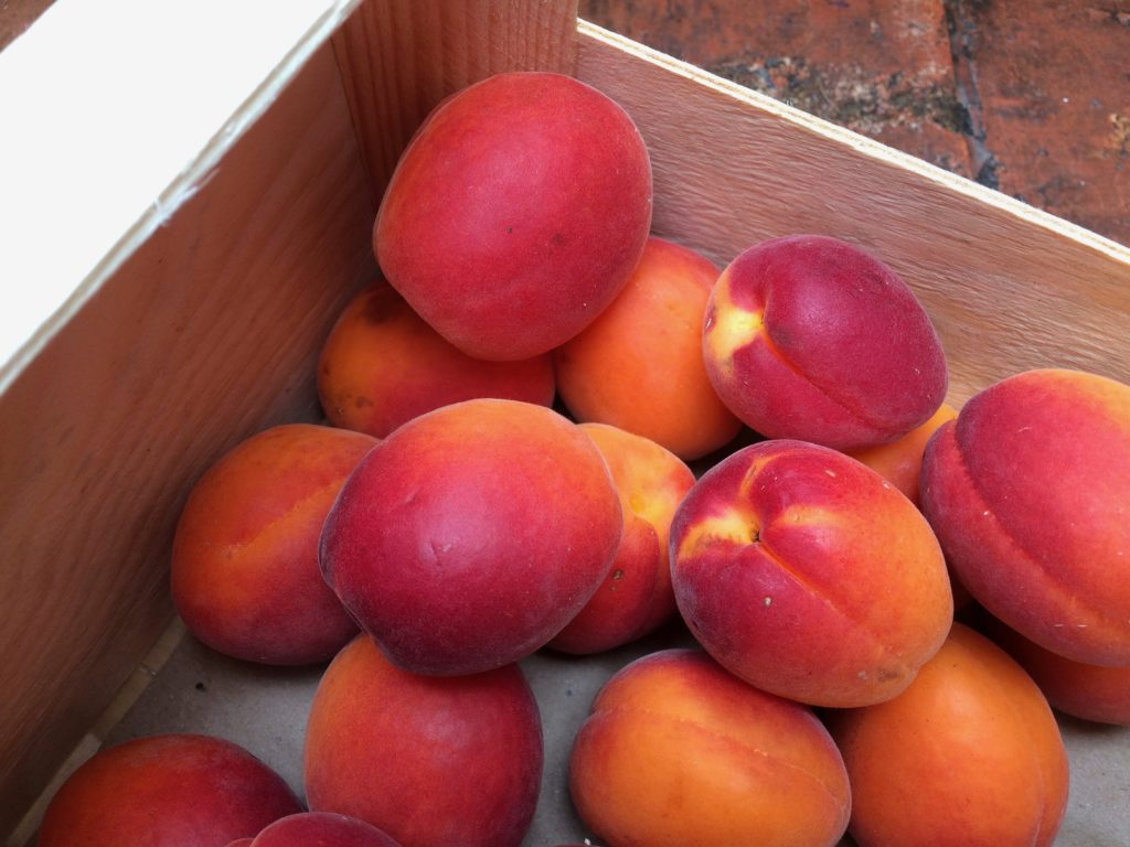 summer apricots in their crate