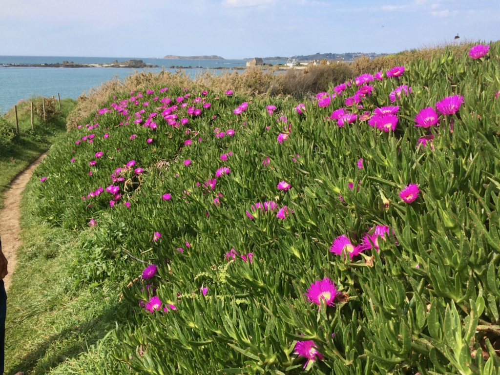 Breton Flowers